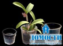 Особенности горшков для орхидей