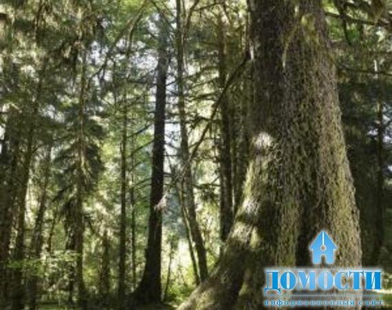 о смешанных лесах северной америки и фото