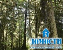 Умеренные леса Северной Америки