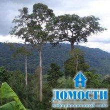 Два лесных региона в Африке