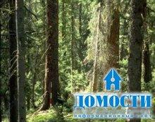 Польза леса для человека и планеты