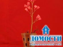 Идеальные условия выращивания орхидей