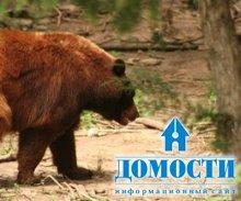 Четыре группы животных смешанных лесов