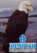 Особенности строения и обитания белоголовых орланов