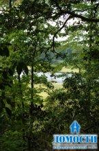 Роль леса в жизни людей