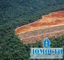 10 фактов о вырубке леса