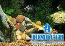 Красивый аквариум своими руками