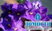 Всепрощающие комнатные цветы