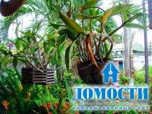 Горшки для выращивания орхидей