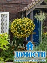 Цветы для украшения экстерьера