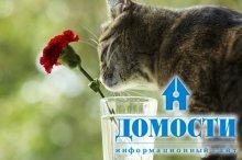 Цветы, опасные для кошек