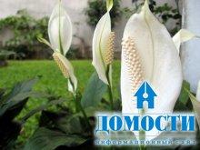 Цветы для здорового дома