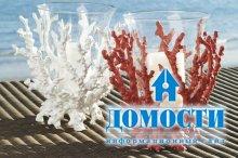 Кораллы в современном интерьере
